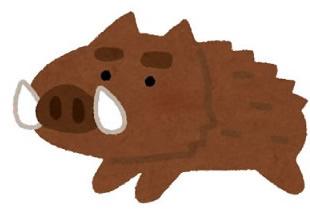 どちらが美味いのか?豚とイノシシを食べ比べてみた。