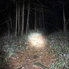 狩りバカ日誌 2019年3月11,12,13日(散弾銃・単独?忍び猟)