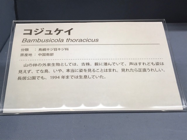 大阪市立自然史博物館の「知るから始める外来生物」展で現状を視察してきた。