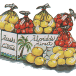 Florida orange, grapefruit, grapefruits, oranges, tangerines, navels