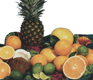 Florida oranges, grapefruit, tangerines, lemons, pineapple