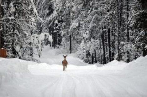deer-1605673_1280