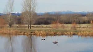 Swan Bozeman