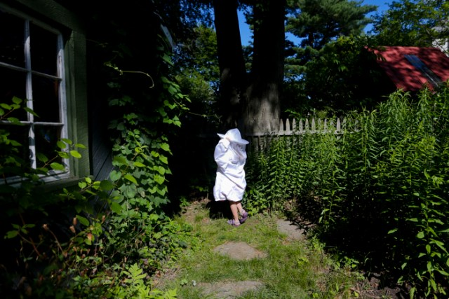 "Pearl Neafsey, 6, walks to her beehives behind her family shed in Newtonville, MA on June 26, 2015. Pearl started beekeeping with her father at the end of spring. Every week Pearl and her father check on the beehive, the honeycombs, the queen, and more. ""I like the bees because the they don't sting me,"" said Neafsey. ""The bees don't sting me because I take care of them."""