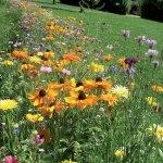 Semence-gazon : semencier professionnel & spécialiste des espaces verts
