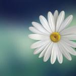 Josette fleurs : fleuriste et livraison de fleurs à Angers