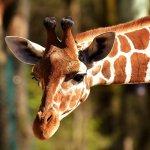 Zoobelgique : informations sur les parcs animaliers belges