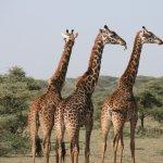 Endallah : safari en Tanzanie et voyage en immersion chez l'habitant