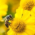 BeeHumming : des bijoux pour sauvegarder les abeilles