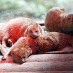 Tout savoir sur le zoo de Guadeloupe