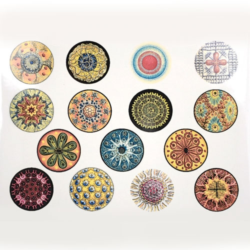 decalsfull-diatoms