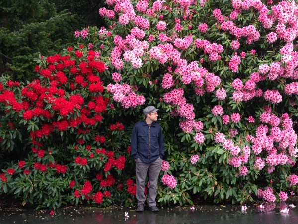 Rhododendrons in Victoria