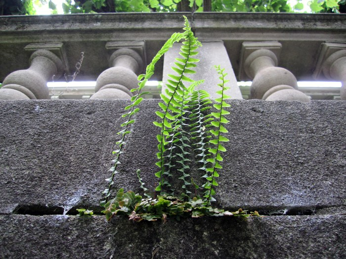 Plant growing out of stone