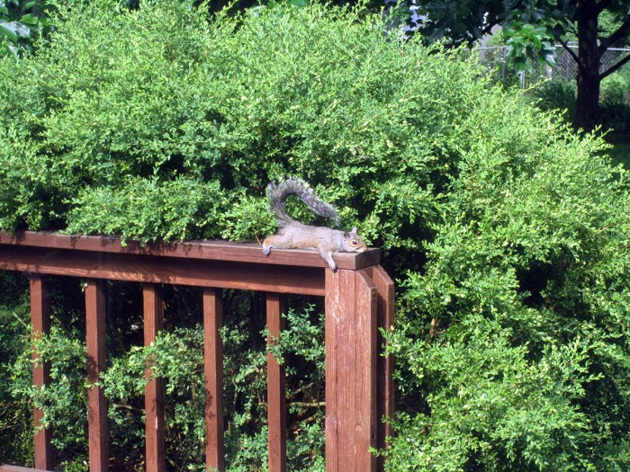 May 29th: Squirrel taking a strange rest