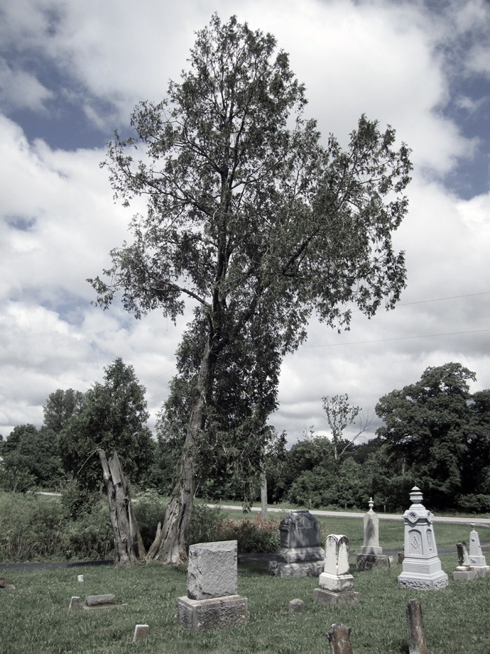 June 24th: Gravestones and tree