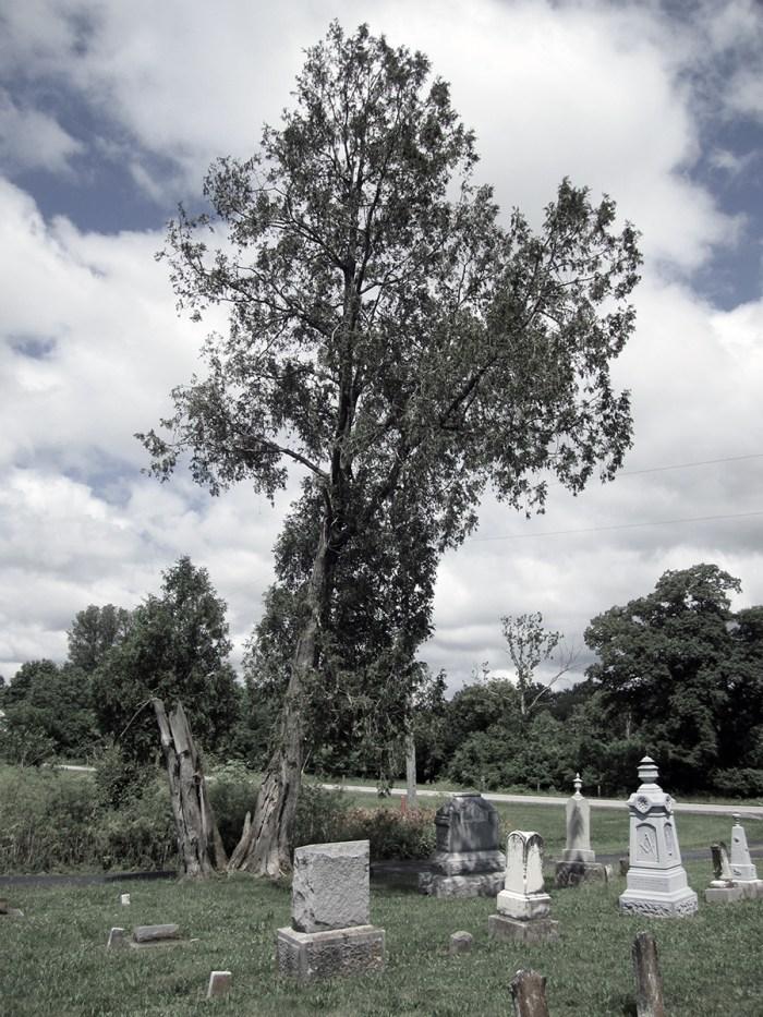 June 24th: Gravestones and tree