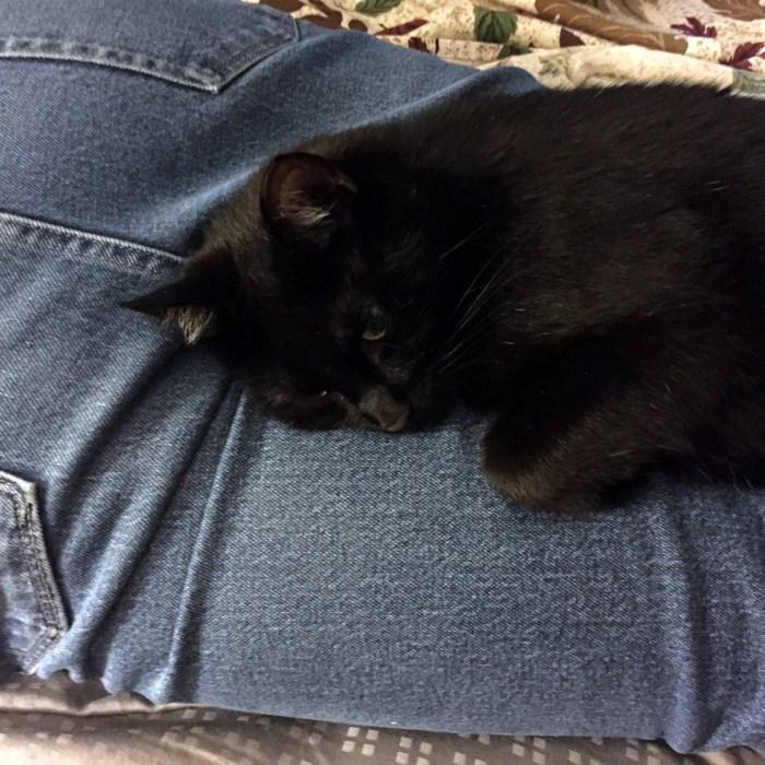 July 13th: Doogie loves my butt