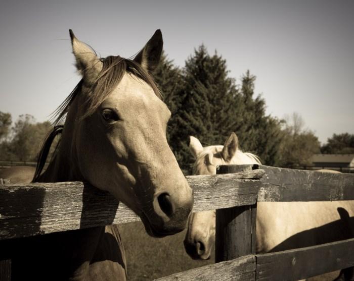 October 10th: Horses