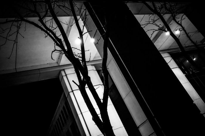 Jan. 29: Trees in the Dark
