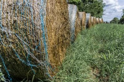 July 11th: Hay, Bloomington