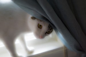 Oct. 9th: Kitty