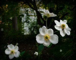 Dec 15: Flowers