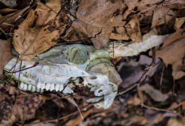 February 6th: Skull