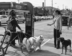 Feb 25: Doggies