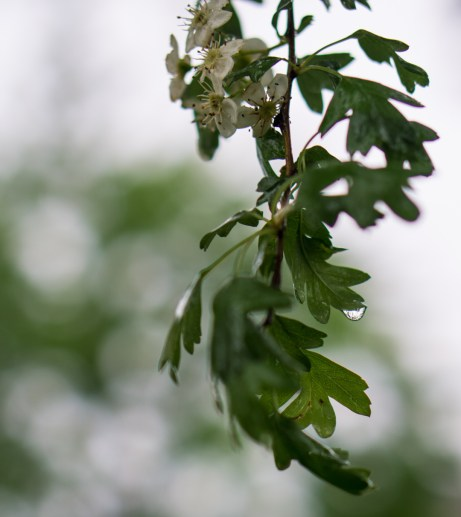 May 12th: Wet Leaves
