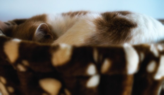 June 27: Kitty at Nine Lives Cafe