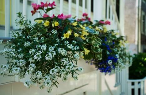 July 14: Flowers