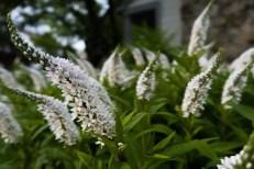 June 21: Flowers