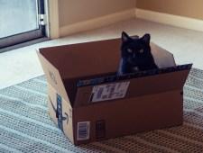 Nov 30th: Doogie in a Box