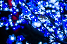 Dec 16: Winterlights at the IMA