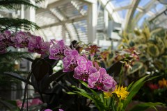 Feb 23: Orchids at IMA