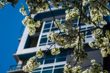 April 21: Flowering Tree and Apartment Building