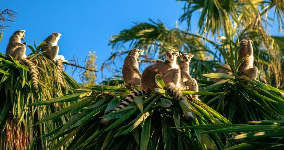 The best places to see lemurs in Madagascar