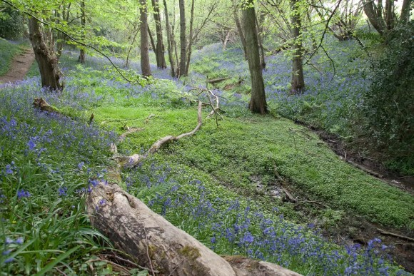 Ashdown Forest, Sussex by Ashdown Forest
