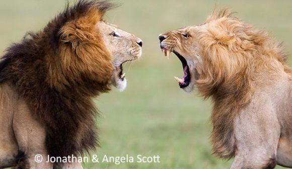 Lions Jonathan & Angela Scott