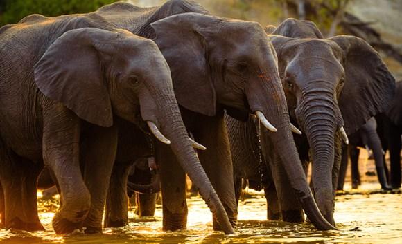 Elephant, Chobe National Park, Botswana by Radek Borovka, Shutterstock