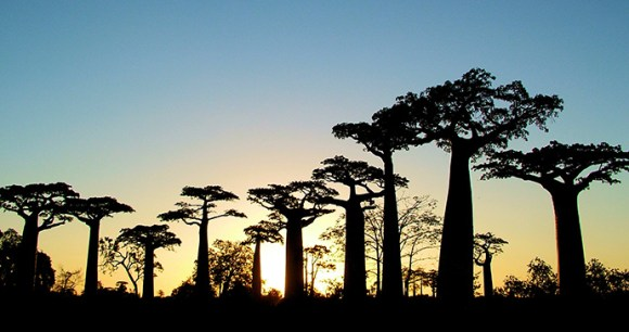 baobab, Madagascar by Madagascar Tourism
