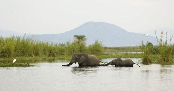 Liwonde National Park, Malawi by Dana Allen, Central African Wildnerness Safaris