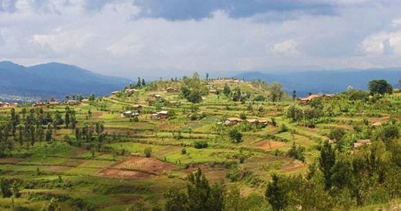 Mount Huye coffee in Rwanda by © AnnaMoores