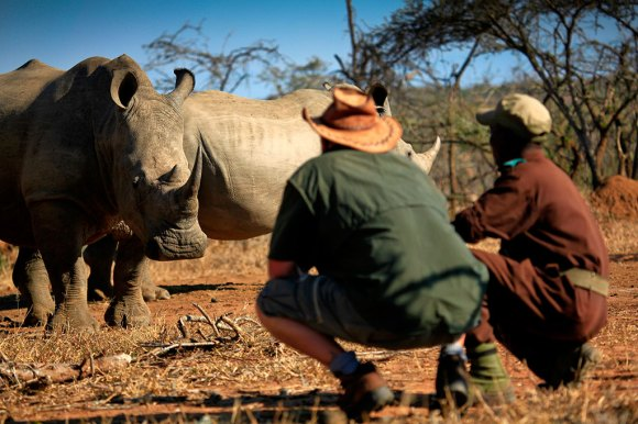 Rhino Mkhaya Game Reserve Swaziland by © Courtesy of Swaziland Tourist Board