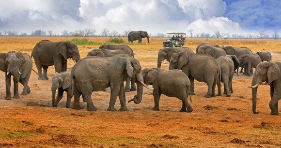 Elephants Hwange National Park Zimbabwe by Paula French Shutterstock