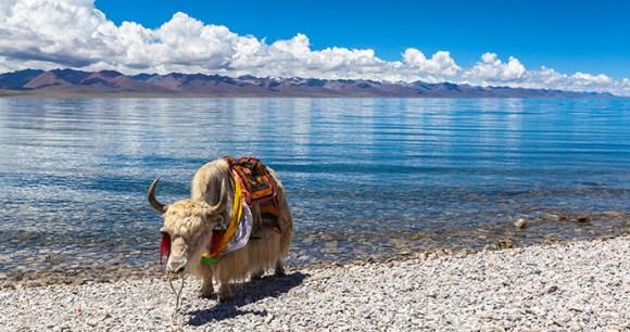 Namtso Lake Tibet China by Peter Stein, Shutterstock