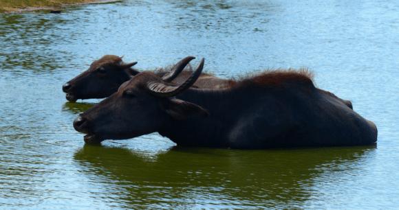 Animals viewed from Safari, Sri Lanka © Hilary Bradt