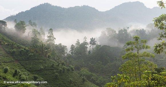 Sinharaja Forest Sri Lanka by Ariadne Van Zandbergen