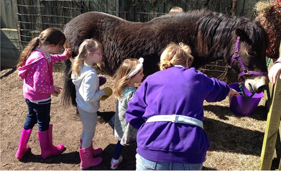 Exmoor Pony Centre Somerset by Exmoor Pony Centre best family days out somerset