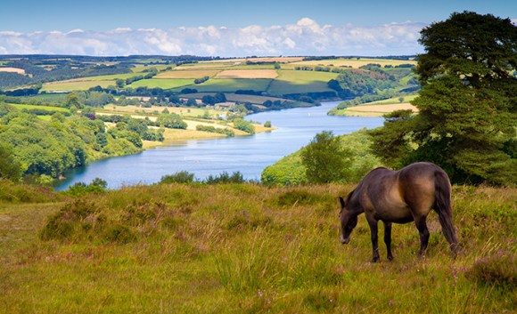 Ponies, Wimbleball Lake, North Devon, UK by Mike Charles, Shutterstock